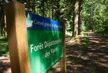 Forêt des Vaseix / Sa grande superficie, sa proximité avec Limoges et son réseau de sentiers font de la forêt départementale des Vaseix l'une des plus attractives du département.