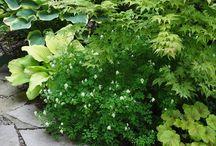Garden / Garden ideas, images, food growing, kitchen garden, plants, flowers, trees, shrubs.