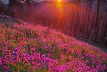 Sunrises / Sunrises