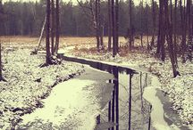 Zima w lesie - Siedlisko na Wygonie / Zimowy spacer po lesie #nawygonie #siedliskonawygonie #spacer