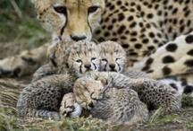 Families / by Leda Palermo