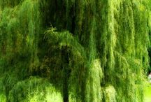 trees in green