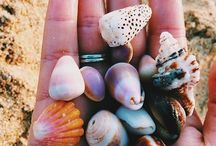 Shells / Small houses for small wolrd
