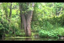 Sounds of Nature Videos