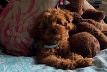 My doggie x
