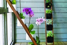 Berkebun / Semua tentang kebun dan berkebun