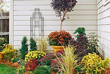 gardening / by Ruth Gurgel