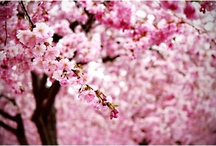 Cherry Blossom Wedding / by Bespoke-Bride