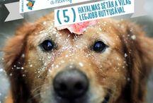 Bútoros.com - Heti Top5 / A heti 5 legjobb dolog, amit a Bútoros.com azért válogatott össze, hogy jobb legyen a kedved! Keresd még: www.facebook.com/abutoros