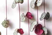 Mur végétal plantes