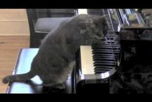 Musical animals / Animals who understand music