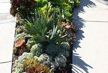 cactus para crear jardin