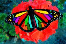 beautiful butterlys