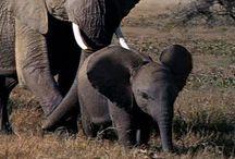 MFW - Elephant