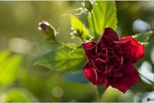 Naturaleza / Naturaleza, Flores