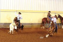 2014 AQHA World Show Horse Sale / Get a sneak peek at all of the 2014 AQHA World Show Sale horses here on Pinterest! Which one do you want? #WorldShowSale #AQHAWorldShow / by American Quarter Horse Association (AQHA)