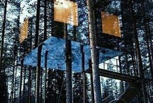 Architecture-Tree Houses / Tree Houses / by Nueva-The Construction Company
