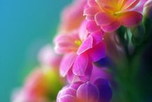 FLOWERS / by Barbara Murphy