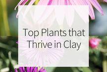 Plants That Like Clay Soil