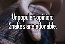 Cute Snakes