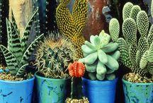 Plantas / by Constanza Delgado