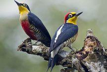 Fauna - Birds