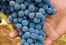 Greek Wine Appreciation