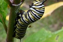 Animals_Invertebrates