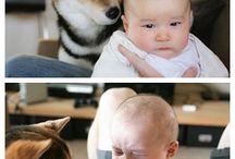 dog / shiba
