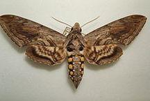 Bugs / by Jocelyn Beatty