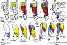 human body-tutorials, references