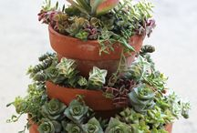 Succulents Fan /
