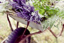plants a vineyard... / by Katheryn Hewatt