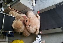 Teddy Behaving Badly