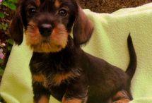 Hondjes en puppies / Ik hou van hondjes en puppies omdat ze schattig en heel erg lief zijn