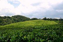 Kenya Farms