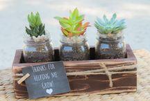 planten bakjee
