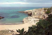 Apulien / das Land / Felsige Küsten, blaues Meer, Palmen, Kakteen und grüne Olivenhaine prägen die Landschaft an der Küste Apuliens.  Monopolis Hinterland ist vielseitig und es gibt viel zu entdecken. Städte wie Locorotondo, Ostuni, Alberobello oder Lecce sind nicht weit.   Das Casa Polpo ist die perfekte Basis für Entdeckungsreisen und einen entspannten Urlaub.