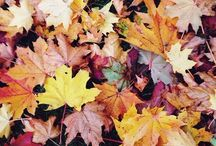 Ağaçlar, yapraklar, orman..