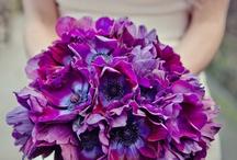 Purple photo shoot - spring / Some ideas...