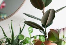 planten en potten
