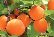 Jardinage arbre fruité