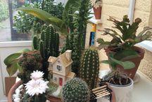 Grace mini gardens / Succulents and cacti