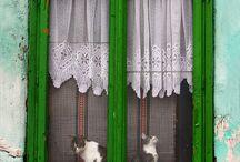 INSPIRING WINDOWS