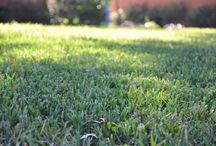 Organic Lawn Care / by Halleck Horticultural