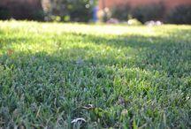 Organic Lawn Care / Organic Lawn CAre