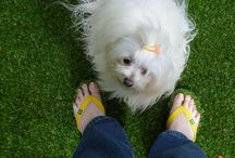For the Love of Dogs / Pets who love artificial grass