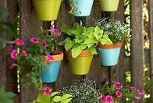 Outdoors / Outdoor potting / by Amy Blair