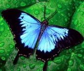 Butterflies / by Faye Clapp