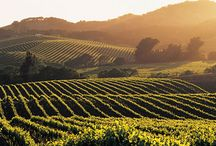 Sonoma County Beauty / The beauty of our home!